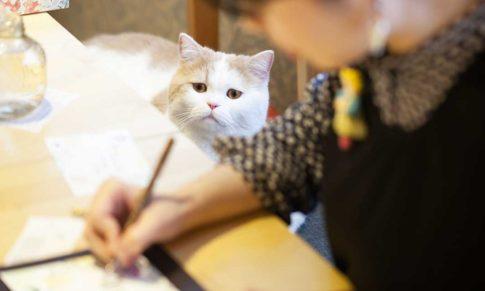 【字醜,怎麼辦?】鋼筆美學家韓玉青經驗分享。